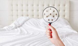 An Overview of Bed Bugs From A Pest Control Pro