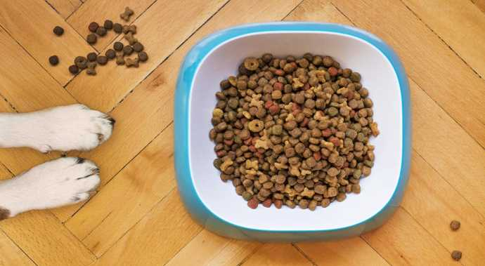Five Reasons to Give Your Dog CBD Treats